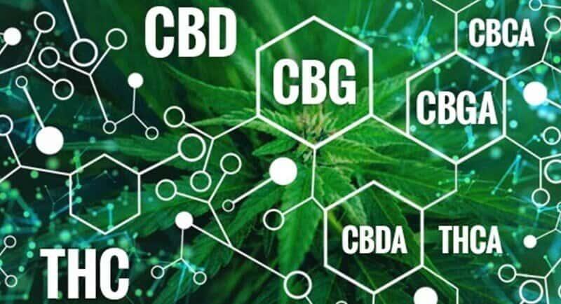 CBD et CBDA